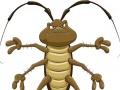 绿洲专业灭蟑灭鼠灭蚁上门服务