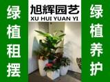 江宁商务大厦软件园创意园产业园绿色鲜花园林/园艺