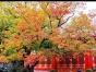 郑州到北京双卧五日深度游|故宫长城颐和园天坛恭王府