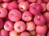 山东万亩苹果大量上市批发价格便宜