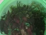 腾地方出五面金晶超白缸,送水草