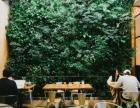 张家口生态植物墙,仿真植物墙安装销售