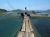 海域使用权抵押贷款评估 渔业养殖设施价值评估