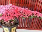 绿植租摆、租花、免费为您策划和设计植物花卉景