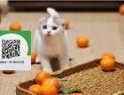 绵阳哪里有宠物店 绵阳哪里卖宠物猫便宜 绵阳折耳猫价格