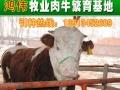 山西鸿伟大型肉牛养殖场品种纯价格低
