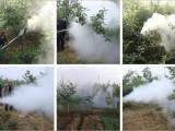 果树果园大棚用弥雾机 农用高压喷雾器 全自动喷雾器厂家批发
