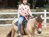 中山骑马的好地方