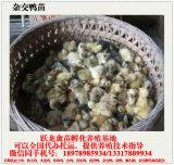 贵州鸭苗供应-广西优质的贵州杂交鸭苗生产基地