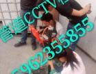 嘉兴平湖市独山港镇污水管道CCTV检测清淤应用科技工程技术
