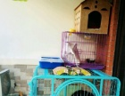 紫色小狗笼子出售