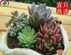 宜昌御花园-花卉绿植租摆批发零售