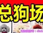 杭州哪里有博美卖 蝴蝶 柯基 秋田 法牛 柴犬多少钱价格