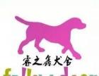 睿之鑫犬舍新宠物直销店(近期开业大酬宾)