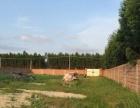 便宜出租2000平米带围墙和房屋地皮