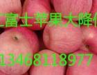 山东红富士苹果批发价格及行情分析