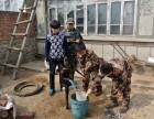 2018牡丹江夏令营,山村变形记开营倒计时!
