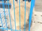 自家养的宠物兔