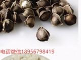 印度进口辣木籽多少钱一斤