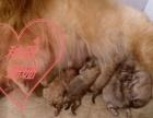 美系珊珊7月29号顺产六条宝宝