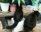 宠物猫寄养洗澡美容服务