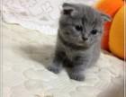 北京实体猫舍 注册猫业 出售波斯猫 售后齐全 让您购宠无忧