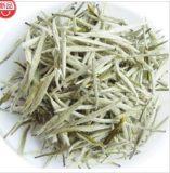 供应 江西特级白茶 高档茗茶有机茶叶