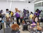派多格学习宠物美容,宠物医疗,训犬开店一站式服务