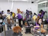 派多格学习宠物美容,训犬和开店一站式服务