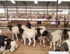 抗战老兵养殖场【大量出售】德州驴 西门塔尔牛 肉驴