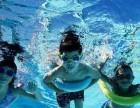 水里的世界-游泳