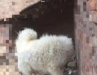 萨摩耶犬喜欢的联系