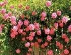 庭院绿化园林绿化各种绿化剪枝打药养护等花树果树