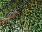 合肥全市仿真植物墙制作施工