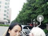 禅城桂城家庭宠物寄养 价格优惠 星级环境pk拾彩票网