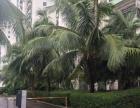 凤凰水城附近,凯丰花园三房出租两房,三个月6000/月,急租