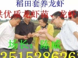 国家级淡水小龙虾种苗培育中心 供应龙虾苗 种虾 抱卵虾