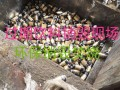 过期食品销毁策略大全上海如何销毁过期奶如何销毁过期饮料及红酒