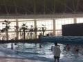 秦皇岛渔岛室内海景温泉。优惠。豪华、好玩、享受。