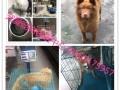 深圳宠物托运,宠物空运宠物跟人随机,宠物接机场派送