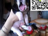 哪里有卖巴吉度猎犬的 怎么才能买到纯种健康的巴吉度猎犬