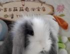 垂耳兔和道奇猫猫兔出售中,淘宝店铺:小吉与萌萌兔