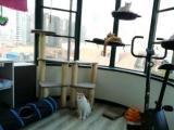 干净负责猫猫寄养猫咪寄宿幼儿园放养不关笼