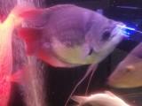 南山专业鱼缸鱼缸清洗消毒,观赏鱼包月护理,鱼缸维修,定做鱼缸