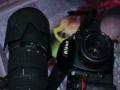 尼康 单反相机 D700 套机