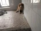 这里有只流浪狗,没养过狗,品种不懂,谁来免费领养走啊