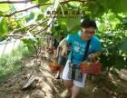 上海滴水湖周边农家乐哪里好玩 推荐采西瓜摘番茄 钓鱼烧烤住宿