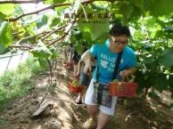 秋季旅游推荐 上海南汇农家乐 摘葡萄桔子+农家土菜+钓大闸蟹