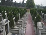 成都公墓陵园墓地 公墓环境 公墓名称