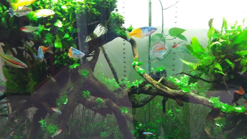 南京鱼缸清洗